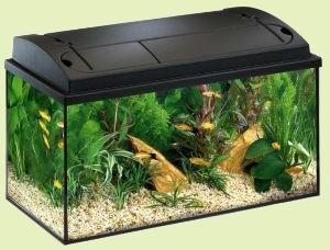 aquarium pour débutant
