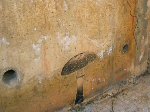 champignon sur mur