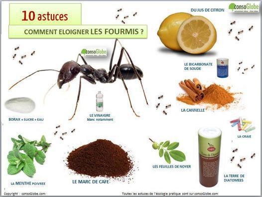 chasser des fourmis