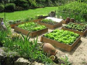 comment commencer un jardin