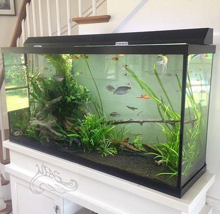 installation aquarium