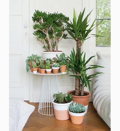 jardin intérieur appartement