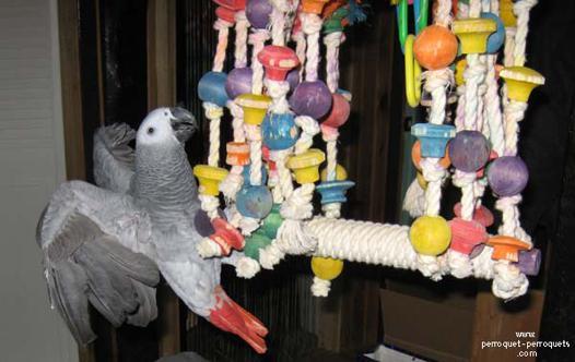 jouet pour perroquet pas cher