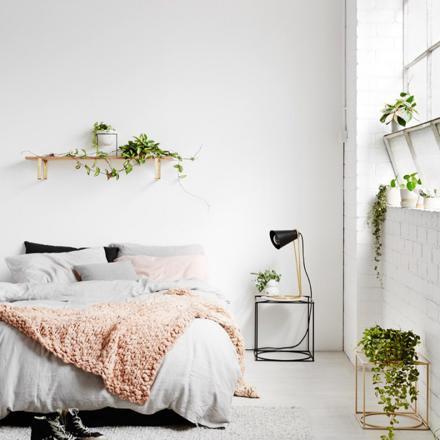 plante chambre