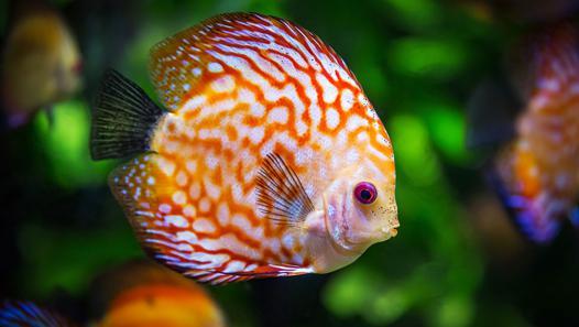 poisson petit aquarium