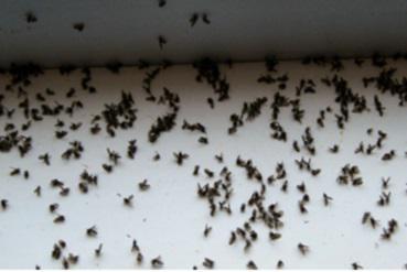 tuer des moucherons